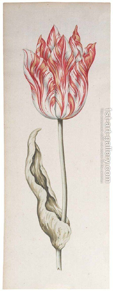 A parrot tulip by (after) Pieter Claesz - Reproduction Oil Painting