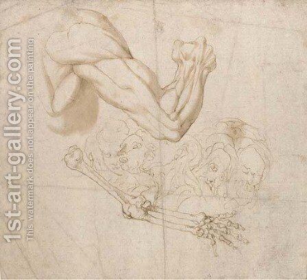 A shoulder and right arm and studies of the bones of the right arm and of five heads by Bartolomeo Torri - Reproduction Oil Painting