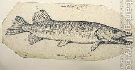 Study of a pike with fish hook by Benjamin West - Reproduction Oil Painting