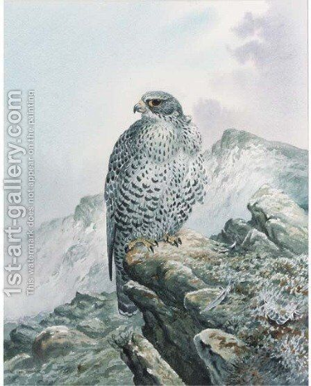 A falcon on a rocky outcrop by Carl Donner - Reproduction Oil Painting