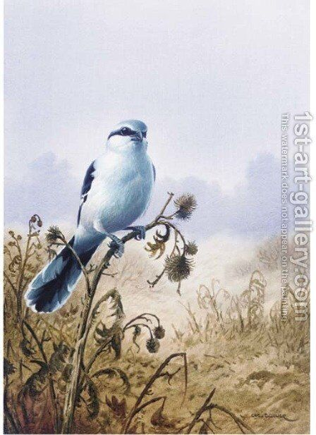 A great grey shrike by Carl Donner - Reproduction Oil Painting