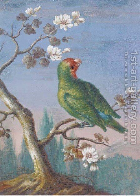 A Red Fronted Parakeet by Christoph Ludwig Agricola - Reproduction Oil Painting