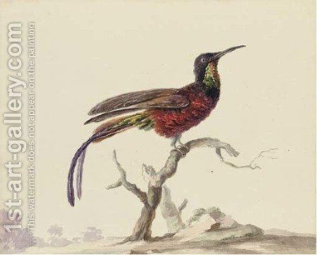 A bird of paradise on a branch by (after) Aert Schouman - Reproduction Oil Painting