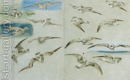 Study of Seagulls by Clarkson Stanfield - Reproduction Oil Painting
