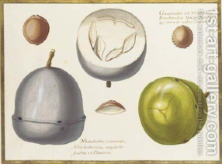 Two studies of an exotic fruit, a cross section of the same and three seeds by Claude Aubriet - Reproduction Oil Painting