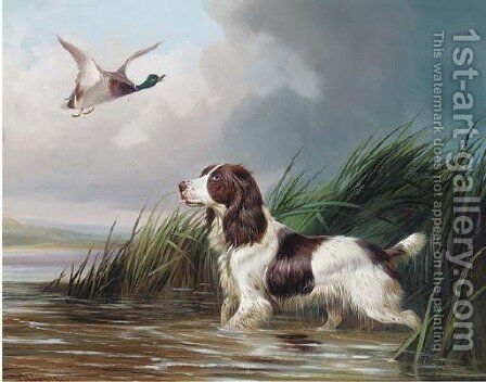 A spaniel putting a mallard up by Colin Graeme Roe - Reproduction Oil Painting
