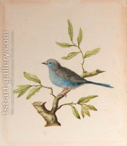 A male blue chaffinch by Dutch School - Reproduction Oil Painting