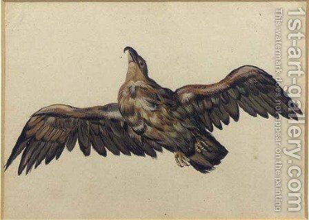 An eagle, with wings outstretched by Dutch School - Reproduction Oil Painting