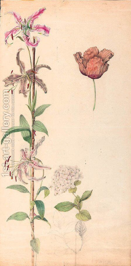 Studies of a lily, a hydrangea and a tulip by Dutch School - Reproduction Oil Painting