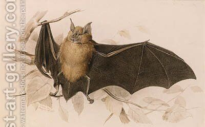 Rhinolophus ferremequinum (Horseshoe Bat) by Edward Lear - Reproduction Oil Painting
