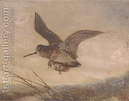 A snipe carrying its young by English School - Reproduction Oil Painting
