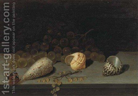 Shells, a brunch of white grapes, white currants and a butterfly on a ledge by (after) Balthasar Van Der Ast - Reproduction Oil Painting