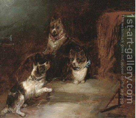 Terriers in a barn by (after) George Armfield - Reproduction Oil Painting