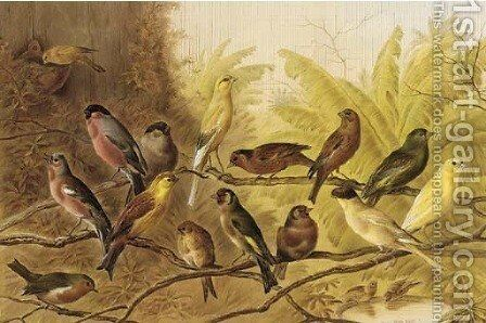 A chorus of song birds in an aviary by Henry Bright - Reproduction Oil Painting