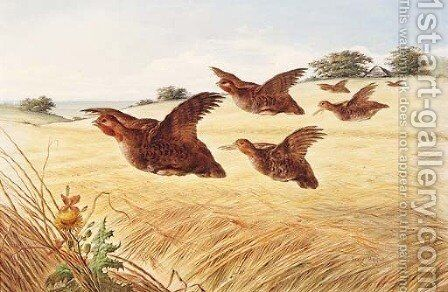 A Covey of Partridge in flight over a Field of Barley by Henry Bright - Reproduction Oil Painting