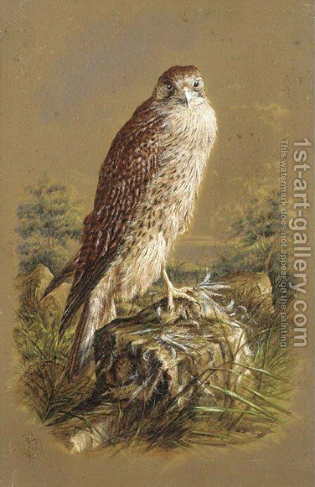 A sparrow hawk by Henry Bright - Reproduction Oil Painting