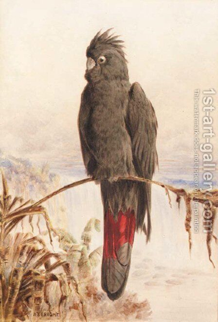 Australian red-tailed black cockatoo by Henry Bright - Reproduction Oil Painting