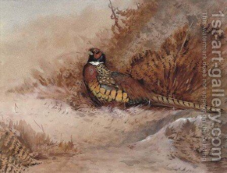 Pheasant in bracken by Ian Bowles - Reproduction Oil Painting