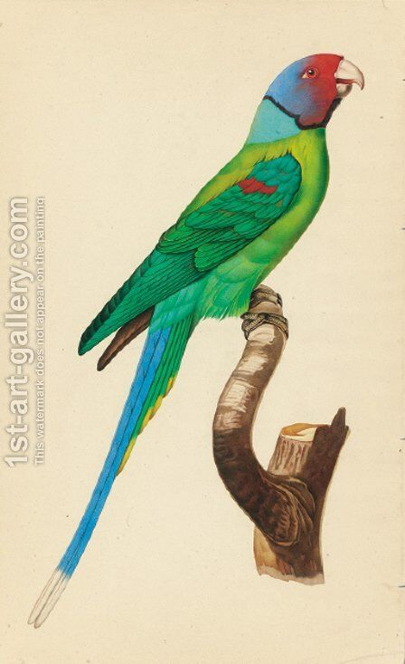 Exotic Bird Studies by Indian School - Reproduction Oil Painting