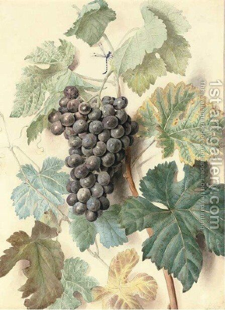 White Sweetwater grapes by James Sillett - Reproduction Oil Painting