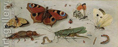 Studies of butterflies, moths, a dragonfly, a grasshopper and other insects by Jan van Kessel - Reproduction Oil Painting