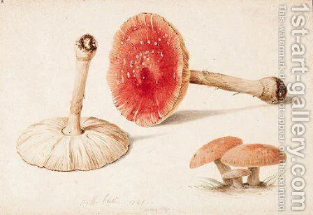 Amanita muscaria (Fly Agaric) illustrated by Jean-Baptiste Huet - Reproduction Oil Painting