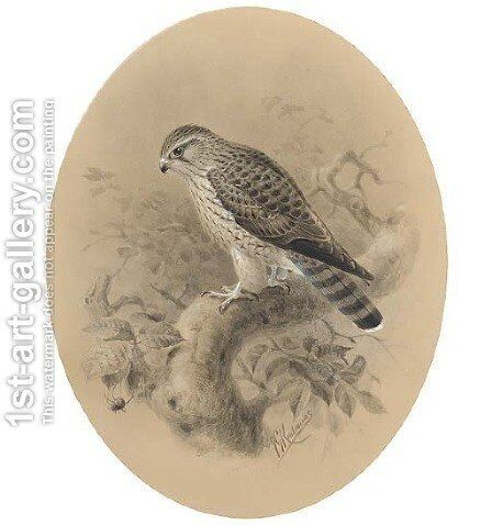 A merlin on a branch by Johan Gerard Keulemans - Reproduction Oil Painting