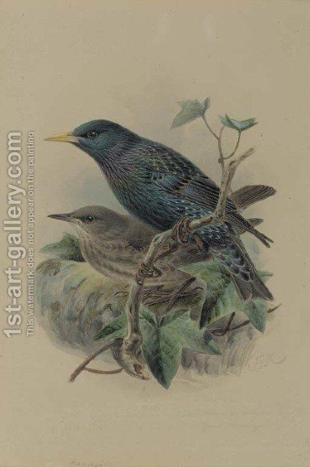An adult and a juvenile European starling by Johan Gerard Keulemans - Reproduction Oil Painting