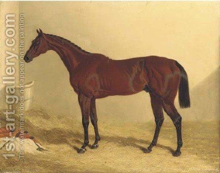Bay Middleton, a bay racehorse in a loose box by John Frederick Herring Snr - Reproduction Oil Painting