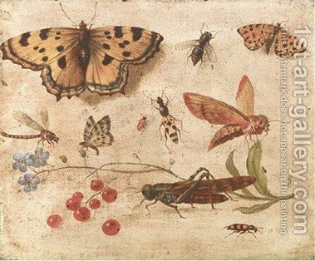 Butterflies, a moth, a cricket, a dragonfly, a beetle and berries by Jan van Kessel - Reproduction Oil Painting