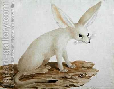 Fennec No. 3 Original of illustration in Travels through Abyssinia by James (Abyssinian Bruce) Bruce - Reproduction Oil Painting