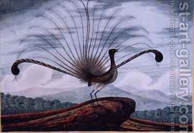 Lyrebird mamura superba by T.R. Browne - Reproduction Oil Painting
