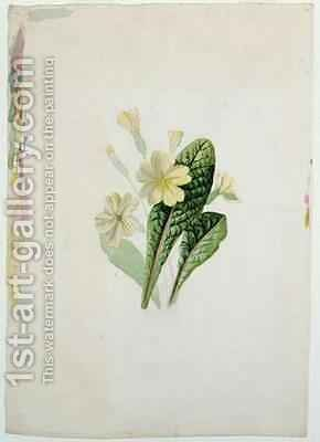 Study of a primrose by Charlotte Bronte - Reproduction Oil Painting