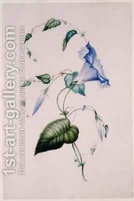 Blue convolvulus by Charlotte Bronte - Reproduction Oil Painting