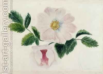 Pink roses by Charlotte Bronte - Reproduction Oil Painting