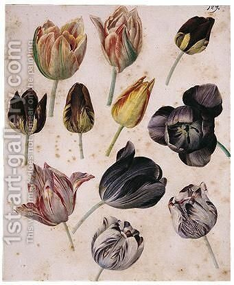 Study Of Eleven Tulips by (after) Pierre-Joseph Redoute - Reproduction Oil Painting