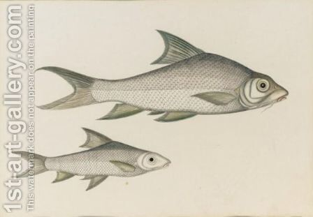 Fish by Indian School - Reproduction Oil Painting