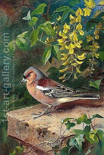 Chaffinch by Archibald Thorburn - Reproduction Oil Painting