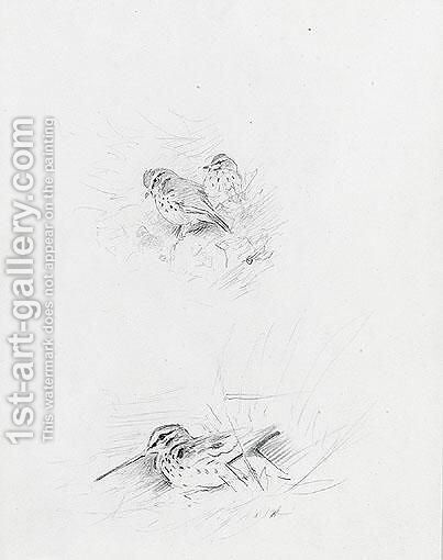 Snipe And Redwing by Archibald Thorburn - Reproduction Oil Painting