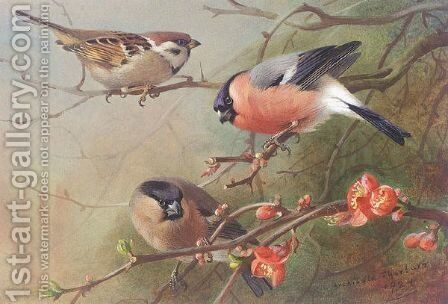 Tree Sparrow And Bullfinches by Archibald Thorburn - Reproduction Oil Painting