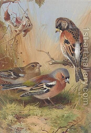A Brambling And Two Chaffinches by Archibald Thorburn - Reproduction Oil Painting