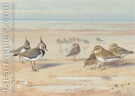 Lapwing And Golden Plover On The Shore by Archibald Thorburn - Reproduction Oil Painting
