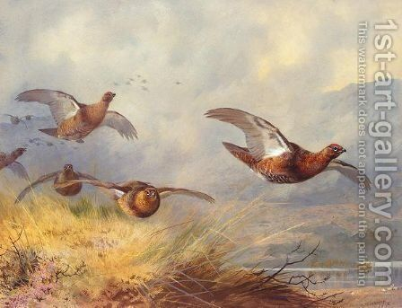 Grouse in flight by Archibald Thorburn - Reproduction Oil Painting