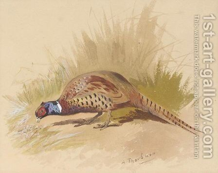 Chinese ring necked pheasant by Archibald Thorburn - Reproduction Oil Painting