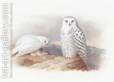 Showy Owls by Archibald Thorburn - Reproduction Oil Painting