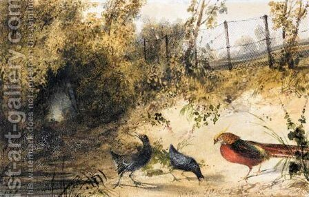 A Golden Pheasant And Moorhens by Newton Fielding - Reproduction Oil Painting