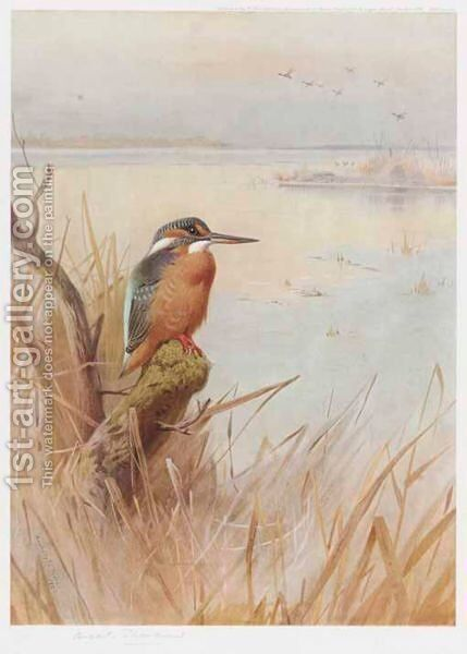 A Kingfisher by (after) Archibald Thorburn - Reproduction Oil Painting