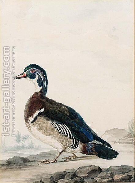 A Duck by Aert Schouman - Reproduction Oil Painting