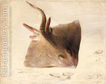 A Still Life Of A Ray by (after) Jan Van Kessel I - Reproduction Oil Painting