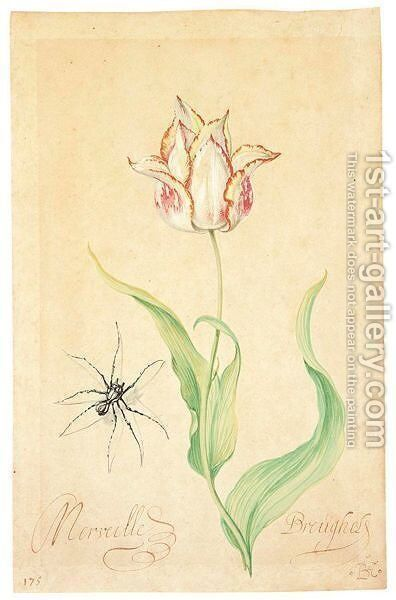 A Tulip 'Merveille Breughel' And Spider by Balthasar Van Der Ast - Reproduction Oil Painting